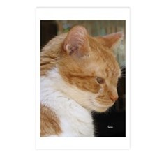 Merwyn: Yellow Tabby Cat Postcards (Package of 8)