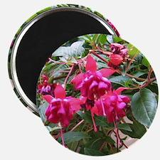 Bleeding Hearts Flower Magnet