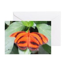 Orange Tiger Butterfly Greeting Cards (Package of