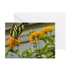 Yellow Butterfly Greeting Cards (Pk of 10)