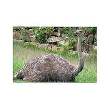 Ostrich Rectangle Magnet