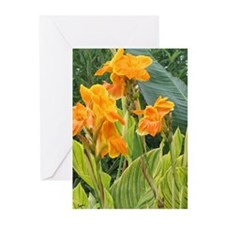 Orange Canna Flowers Greeting Cards (Pk of 10)