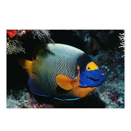 Angelfish in the Maldives Postcards (Package of 8)