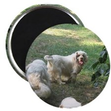 Clumber Spaniel Magnet