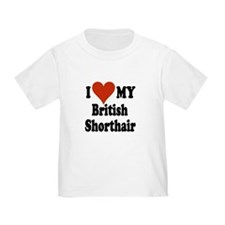 British Shorthair T