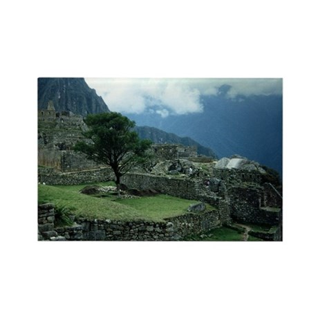 Machu Picchu Tree Rectangle Magnet