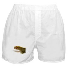 Crested Gecko eye lick Boxer Shorts