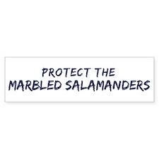 Protect the Marbled Salamande Bumper Bumper Sticker