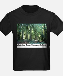 Cathedral Grove 30 T