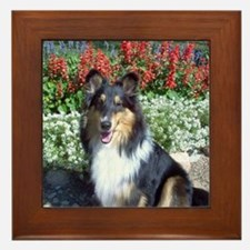 Summer Flower Sheltie Framed Tile