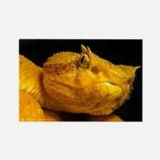 Cute Animals reptiles Rectangle Magnet