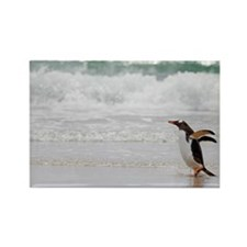 Falklands penguin Rectangle Magnet