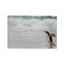 Cool Falklands penguin Rectangle Magnet