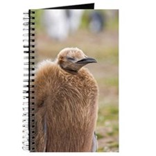 Falklands penguin Journal
