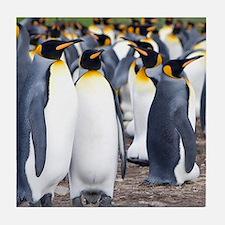 Cute Falklands penguin Tile Coaster
