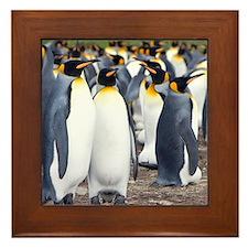 Cool Falkland islands Framed Tile