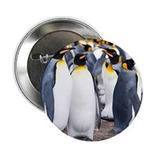 "Cute Falklands penguin 2.25"" Button"