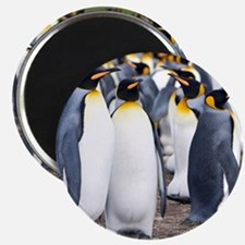 Unique Penguins Magnet
