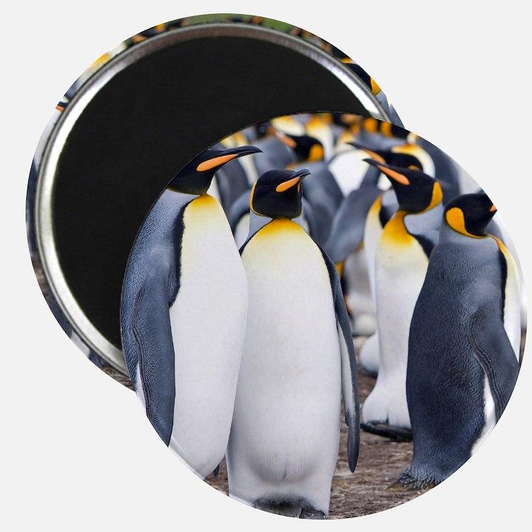 Cute Falkland Magnet