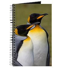 Falklands penguin Journal