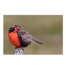 Funny Meadowlark Postcards (Package of 8)