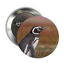 """Falklands penguin 2.25"""" Button"""