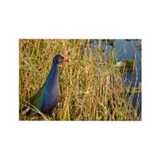 Cute Marsh birds Rectangle Magnet