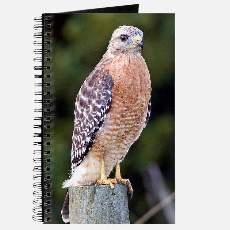 Cute Red hawk Journal
