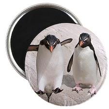 Unique Rockhopper penguins Magnet