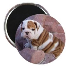 home bulldog gifts Magnet
