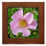 California Wild Rose Framed Tile