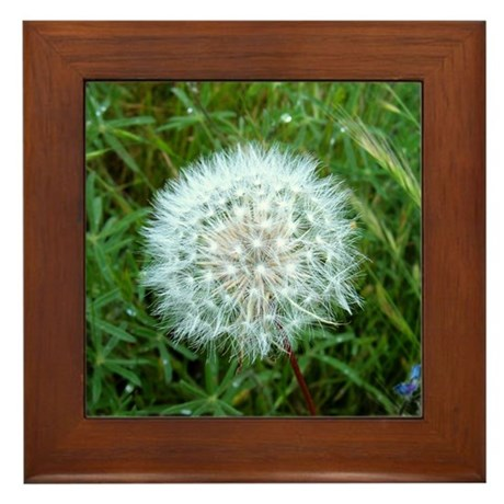 Dandelion Seed Head Framed Tile