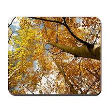 Aspen Autumn Mousepad