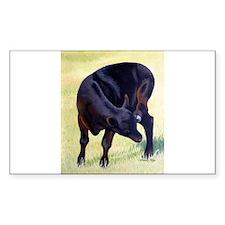 Black Angus Calf Rectangle Decal
