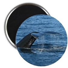 Whale Tail - Magnet