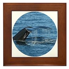 Whale Tail - Framed Tile