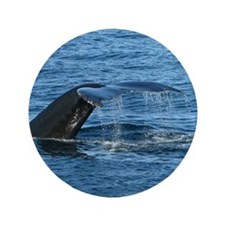 """Whale Tail - 3.5"""" Button (100 pack)"""