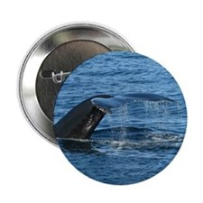 "Whale Tail - 2.25"" Button (10 pack)"