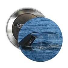 "Whale Tail - 2.25"" Button"