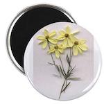 FLOWER CORIPOSI Magnet