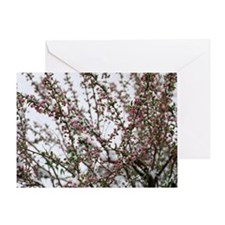 Think SPRING ! Greeting Card