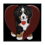 Bernese mountain dogs Drink Coasters