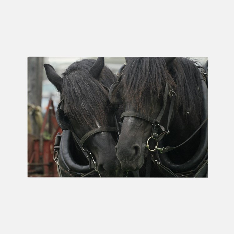 Percheron Draft Horses Rectangle Magnet