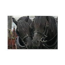 Percheron Draft Horses Rectangle Magnet (100 pack)