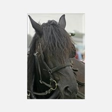 Black Percheron Horse Rectangle Magnet