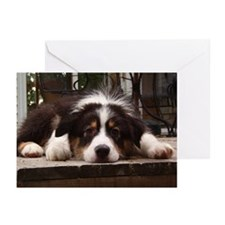 Patient Tri Greeting Cards (Pk of 10)