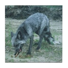 Silver Fox Chewing Tile Coaster