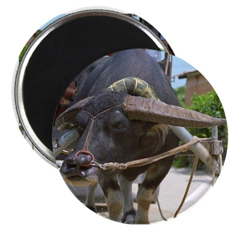 """Water Buffalo 2.25"""" Magnet (10 pack)"""