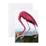 Flamingo Greeting Cards (Pk of 10)