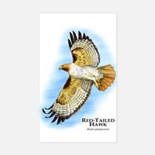 Red-Tailed Hawk Rectangle Decal